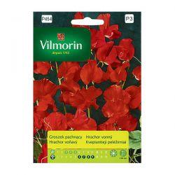 Groszek pachnący czerwony Vilmorin