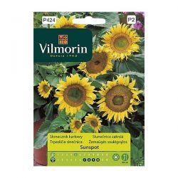 Słonecznik karłowy Sunspot Vilmorin