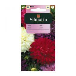 Aster chiński karłowy mix Vilmorin